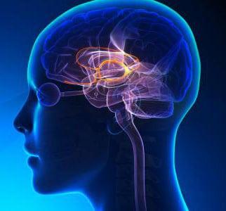 الجهاز العصبي - مصحات ياخيموف