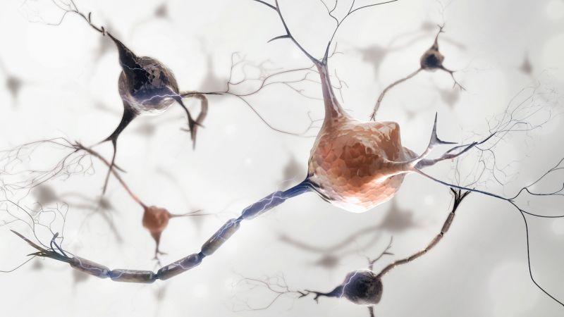 الجهاز العصبي للاطفال - مصح نوفي لازني