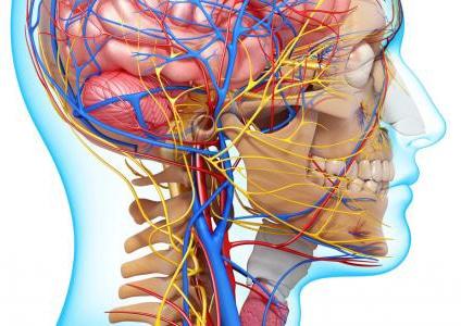 1أمراض الجهاز العصب2